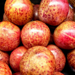 Плумкот Триумф (гибрид сливово абрикосовый)