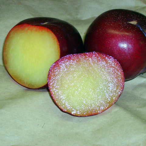 Плумкот (абрикосовая слива) Алекс